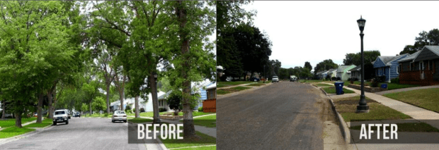 Midwestern cities like Toledo, Ohio experienced widespread deforestation due to emerald ash borer.