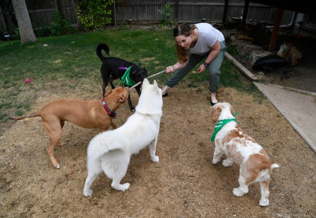Rover Sitter Hailey Colebank plays with ...