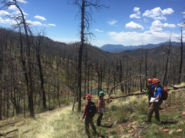 Staffers with the Rocky Mountain Field Institute and U.S. Forest Service enter a valley along the Waldo Canyon burn scar to check on the progress of willow trees they planted in 2016.