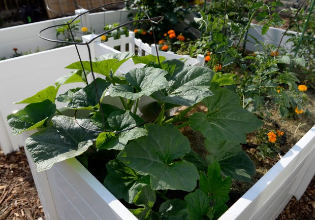 Megan Keefe's keyhole garden is square, but many of them are round.