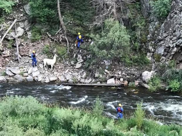 This photo from the Loveland Fire Rescue Authority's Facebook page, shows rescuers helping a llama that was stranded on the south side of the river about 6 p.m. Thursday. Speckles and rescuers made it back across the river safely.