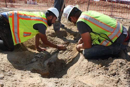 Construction workers unearth rare triceratops fossil in Colorado
