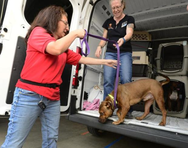 Jo Zoetewey, left, tries to coax a dog down from a van as Rhea Moriarity watches at the Longmont Humane Society on Monday. The Humane Society agreed to take in 45 dogs from a shelter in Austin, Texas, so that shelter can make room for pets displaced by Hurricane Harvey.