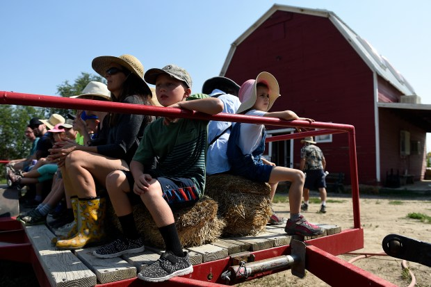 Students and teachers from the Denver Waldorf School take a hay ride around the farm before they pick strawberries during a field trip at Berry Patch Farms on Aug. 30, 2017, in Brighton.