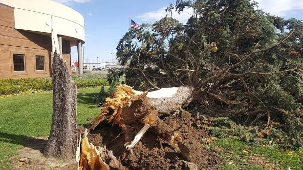 A downed tree sits in front of The Greeley Tribune offices near 8th Avenue and 6th Street after high winds brought it down. Wind gusts reached nearly 55 mph on Saturday afternoon in Greeley, snapping power poles and tree limbs
