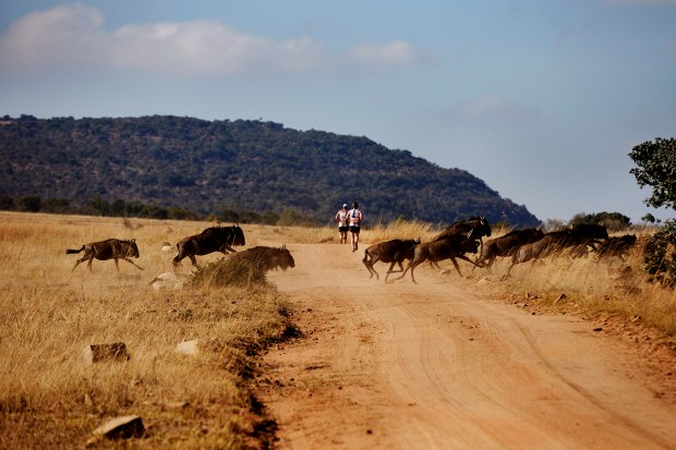 Runners get a safari-like experience in the Big Five Marathon in South Africa, a race that takes place every June. The 2018 race is June 23.
