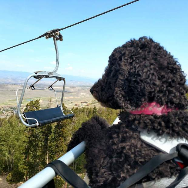 CarrieAnn Grayson's service dog, Guinness, rides up a chairlift at Granby Ranch Resort. Grayson claims Winter Park Resort was discriminatory when they said she and her dog could not ride up chairlifts at the resort.