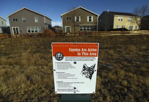 """The area where Dr. Bonnie Abbott's dog, Lander, was killed by a coyote in Erie's Grandview subdivision. """"I've heard people saying they won't even go walking on the open space trail anymore. They don't feel safe,"""" she said."""