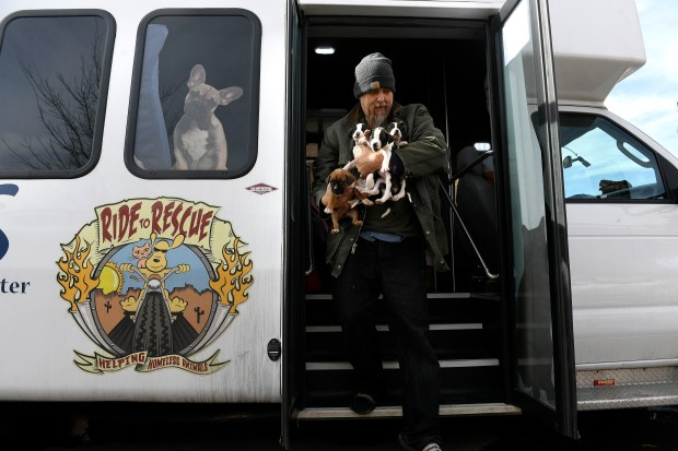 Jim Snipes, a volunteer for the Oklahoma-based Peaceful Animal Adoption Shelter, carries an armload of puppies from a van on Jan. 31 in Denver. PAAS brings 30-50 rescue animals to the Denver Dumb Friends League's Buddy Center each week.