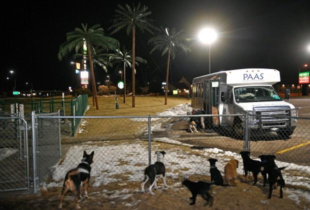 Dozens of dogs get a bathroom ...
