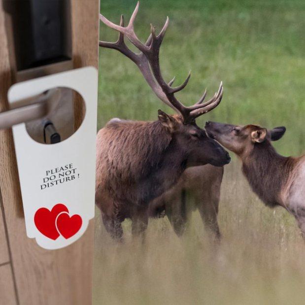 elk with a hotel do-not-disturb door hanger