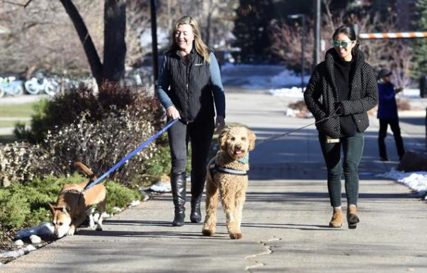 Megan Shih, left, and Heather Locke walk Toby, left, and Bell before an appointment with a student on Tuesday. The therapy dogs are part of a pilot program started this month at the University of Colorado.