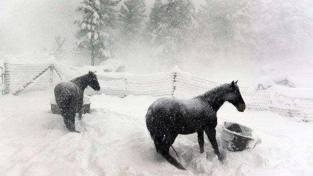 Two horses, Rocky and Magic, left ...