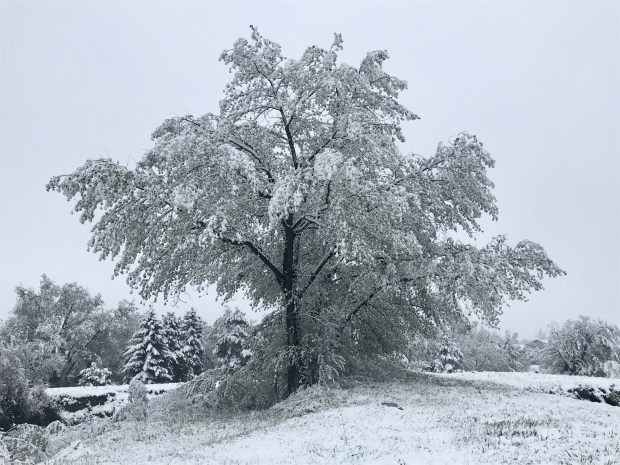 Snow covers a trees on May ...