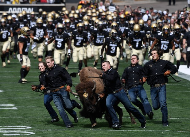 Ralphie The Buffalo and its handlers ...
