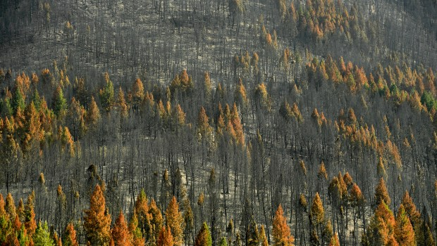 Entire mountainsides are completely burned from ...