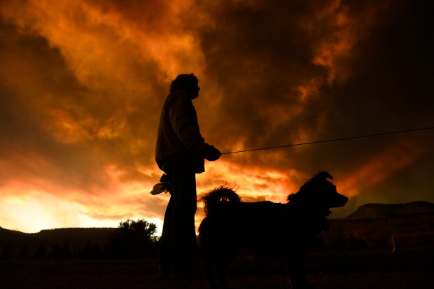 Calista Morrill, walking with her dogs ...