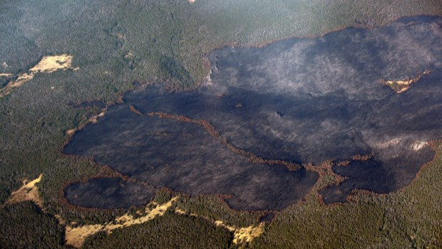 Areas of burned forest are seen ...