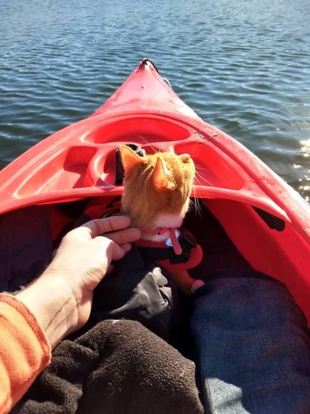 Maya the cat kayaking with her dad, Richard Auchus.