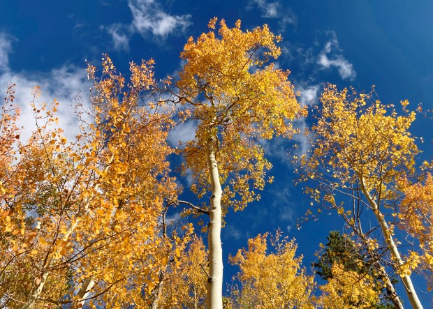 Fall colors on the Herman Gulch ...