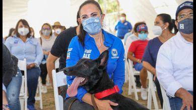 Photo of Promete Ale Gutiérrez un centro veterinario de bajo costo