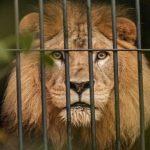 Atriz pornô teve a cabeça arrancada após fazer sexo com um Leão