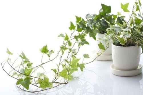 plantas dormir depa de soltera