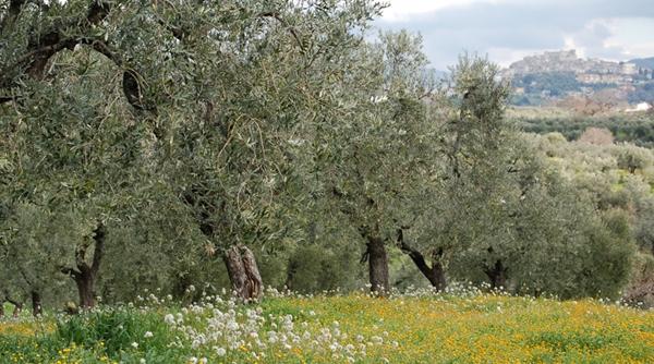 Valle della Comodità 2008
