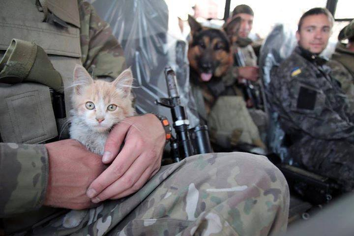 Cats in ATO: the best for 2016 - Photo 9