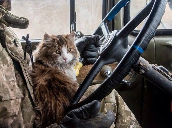 Cats in ATO: the best for 2016 - Photo 18