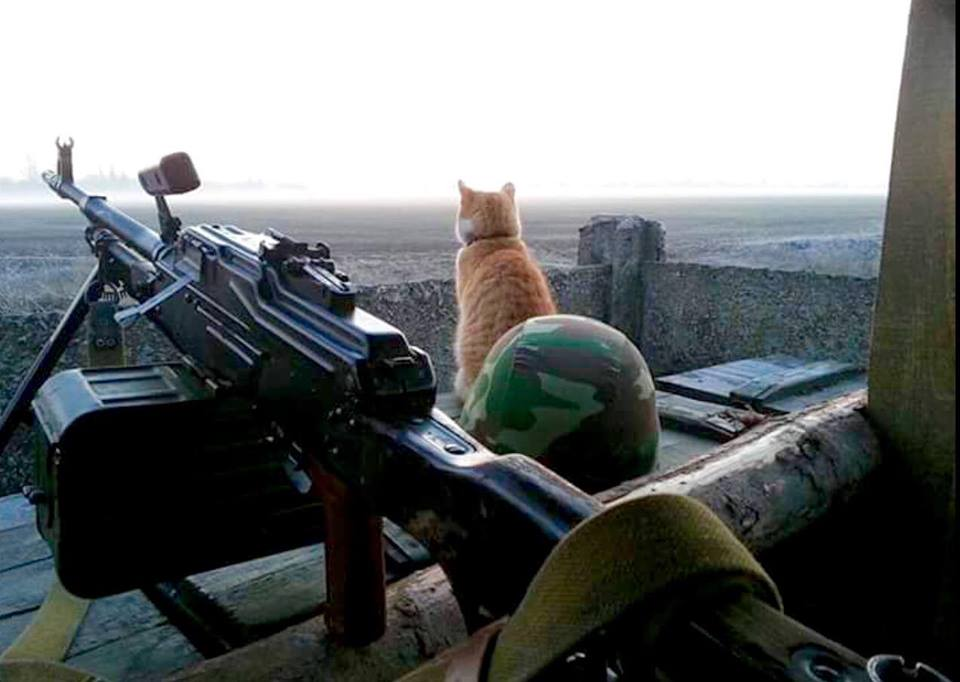 Cats in ATO: the best for 2016 - Photo 31