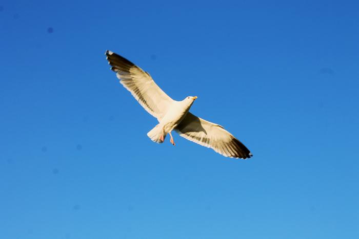 birdddd