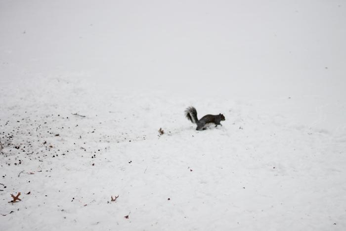 esquilo-na-neve