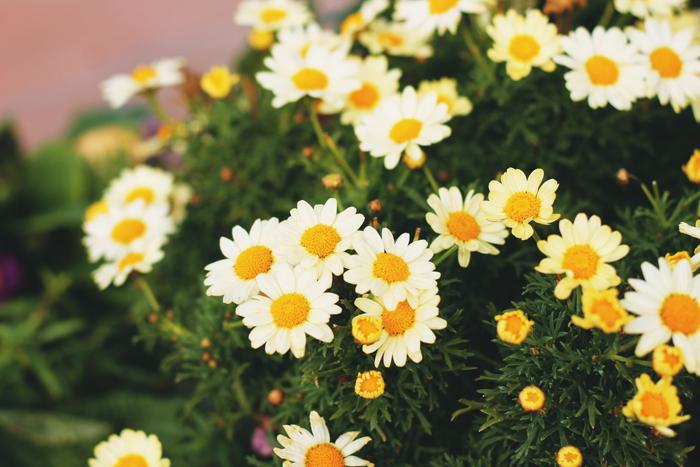 flores-universal