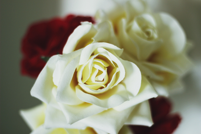 flores-tok&stok