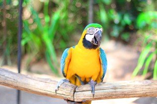 parque-das-aves-3