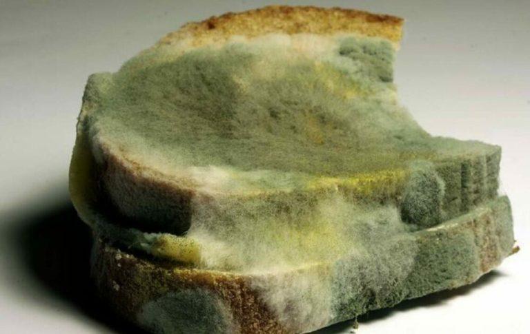 Presencia de moho de los alimentos