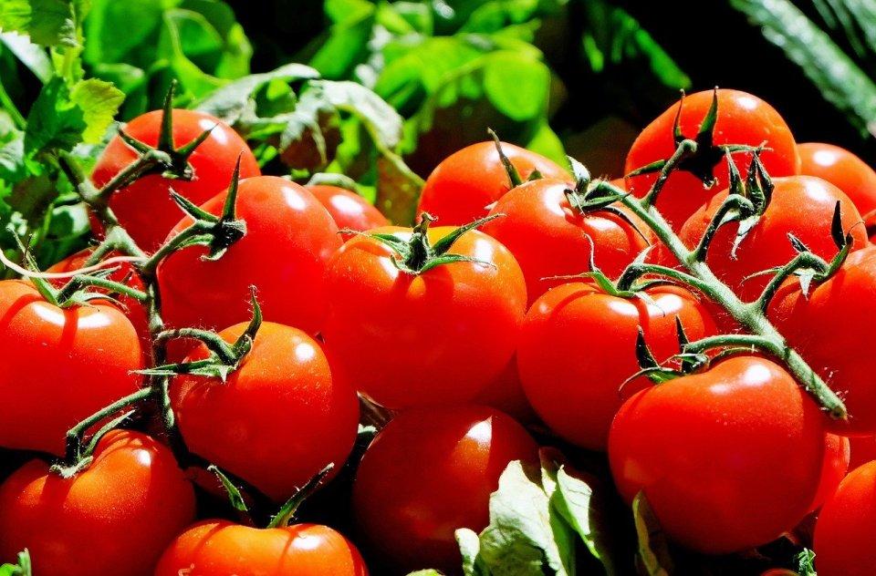 Los niveles de PH del tomate van entre los 4,2 y 4,9