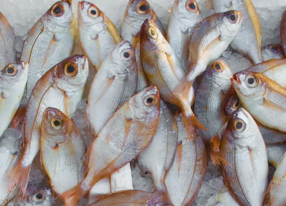 Los anisakis son parásitos que anidan en los pescados, principalmente en la ventresca