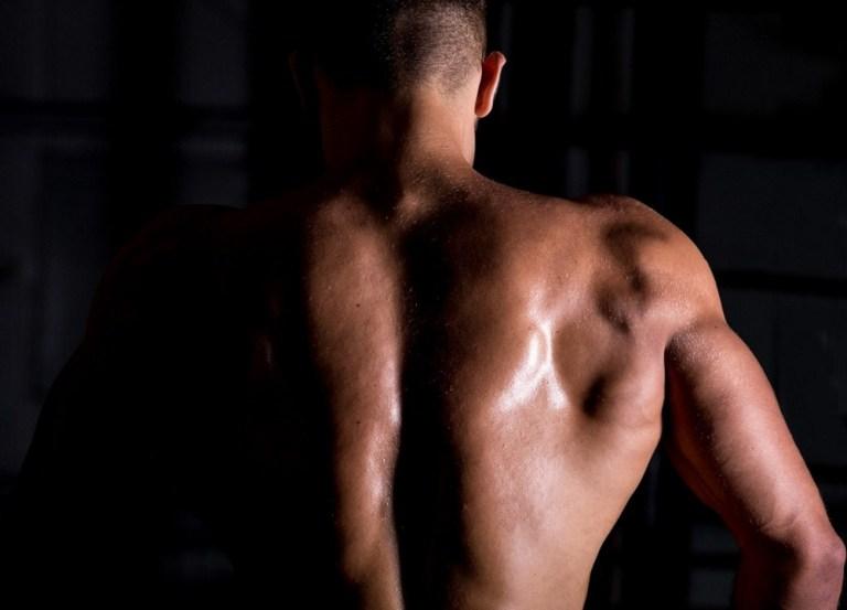 definir los músculos de la espalda
