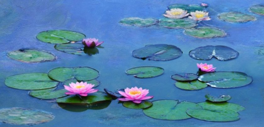 recensie Water Lilies of Monet: The Magic of Water and Light