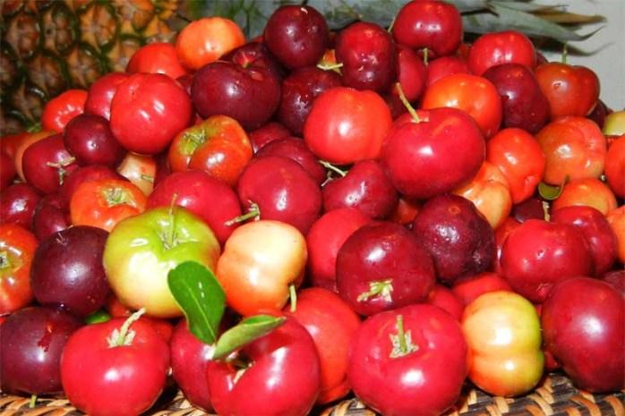 acerola-cherries