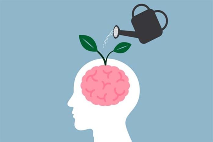 brain-nourishment