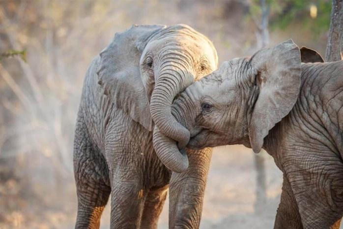 elephants-romantic-animals