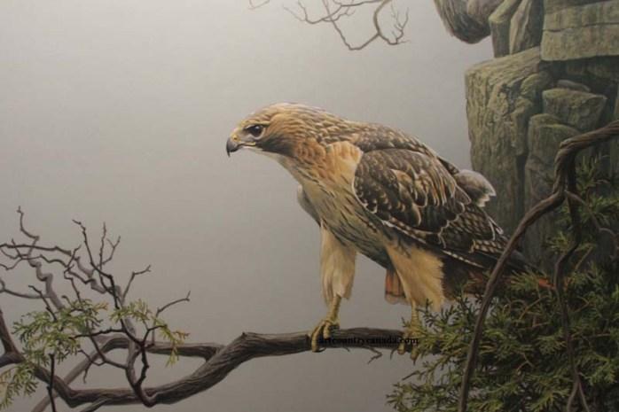 red-tailed-hawk-dangerous-birds