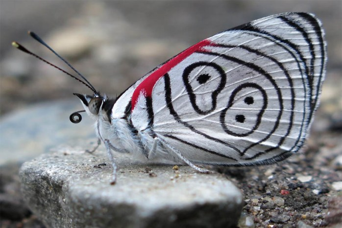 eighty-eight-butterfly