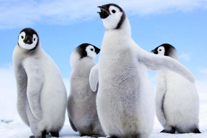 Penguin-endemic-animals