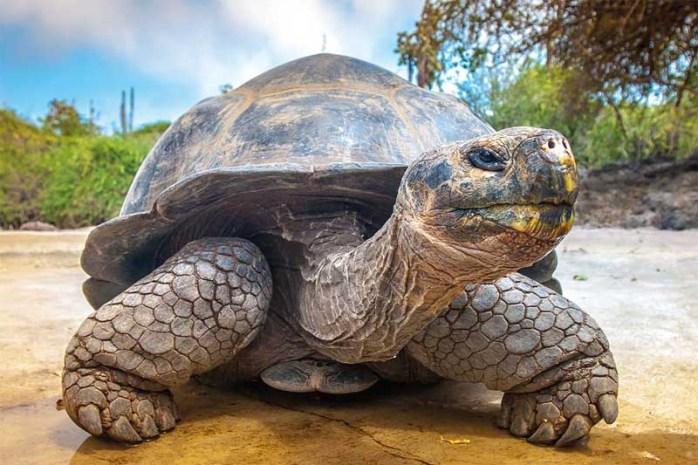 giant-tortoises-longest-lived-animal