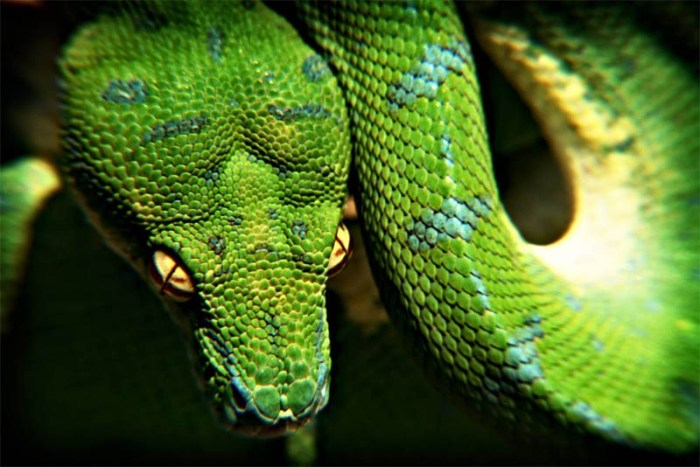 high-tree-python-beautiful-snake