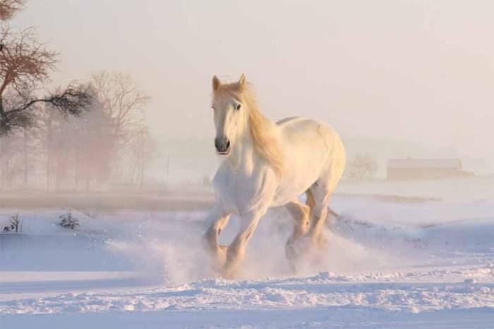 horse-friendliest-animals